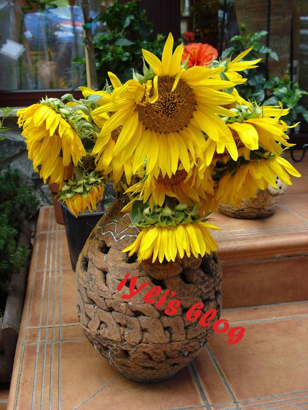 floarea soarelui by iYli