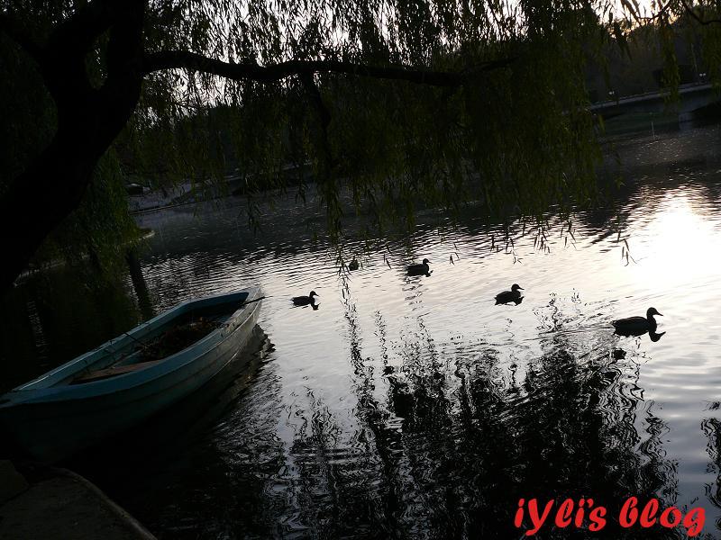 iYli in parcul Carol (1)